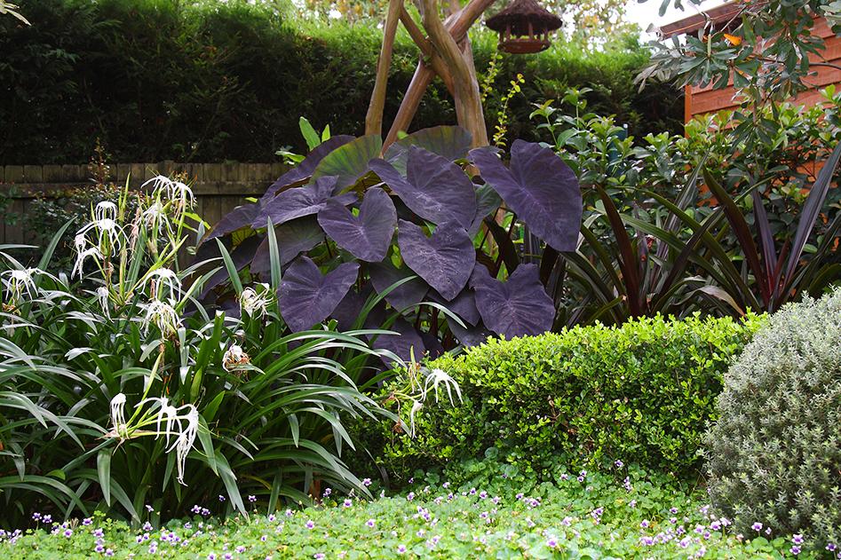 sydney's professional landscapers, pool builders & gardeners